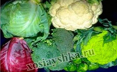 Капуста один из любимых овощей в Европе, в  Азии и в Америке.